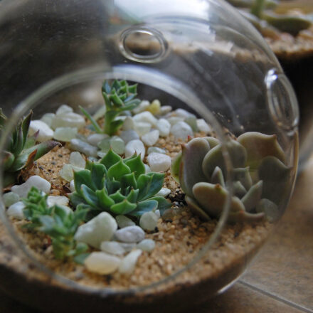 Know More About Terrarium Singapore And Its Various Concepts