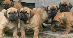 What Is The Importance Of Buying Online Dogs?
